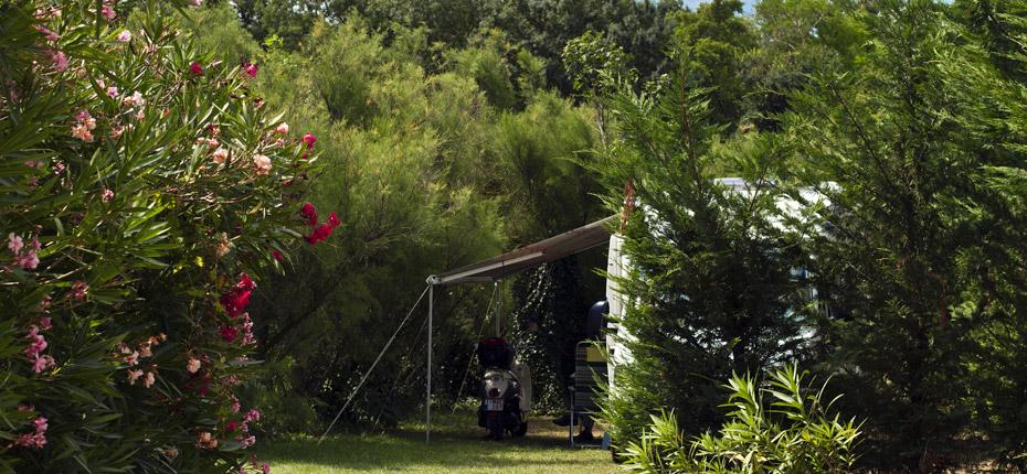 Arbustes fleuris, emplacement ombragé